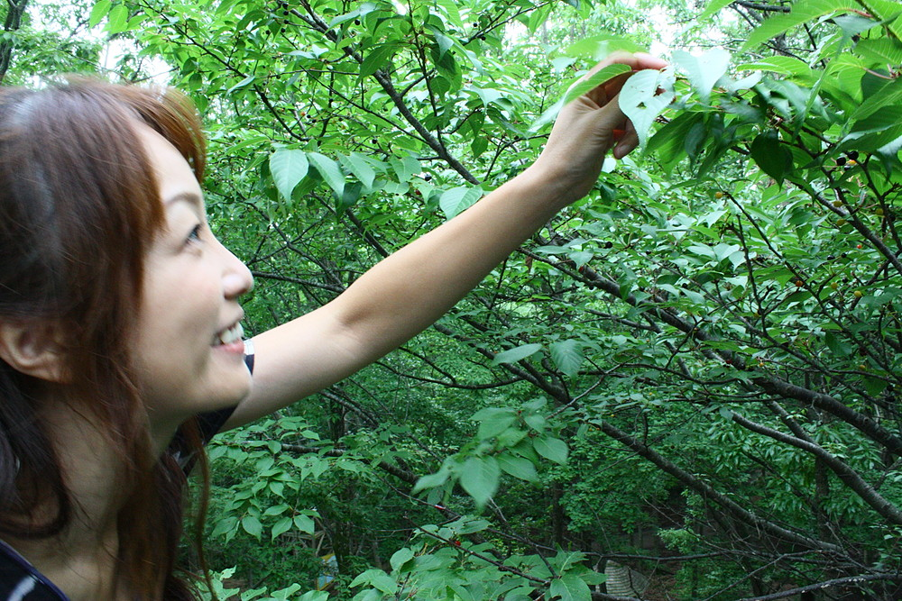 山桜と藤本えみり